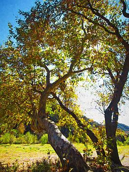 Dale Jackson - Sunlight through the trees