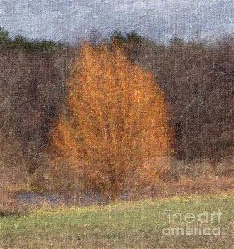 Sunlit Autumn Tree Impasto Filter by Conni Schaftenaar