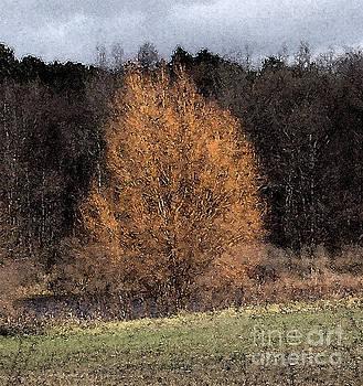 Sunlit Autumn Tree Watercolor Filter by Conni Schaftenaar