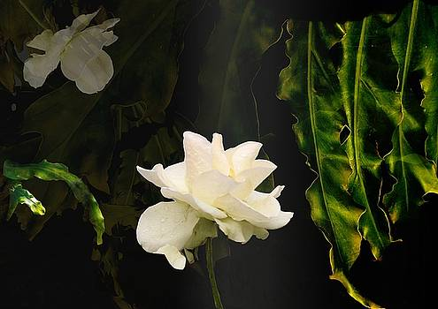 Sunlit - Botanical Art  by ImPrintable
