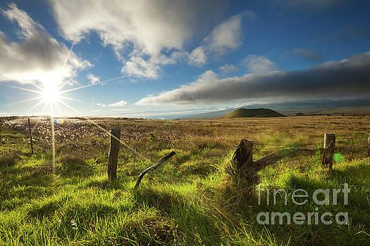 Charmian Vistaunet - Sunlit Country Field - Big Island