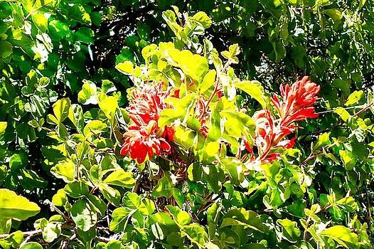 Sunlit Desert Flowers by Wayne Ligon