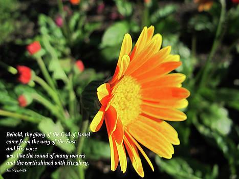 Sunlit Orange Daisy with Bible Verse by Lynn Harrison