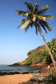 Sunlit palm tree over the beach Goa by Deborah Benbrook