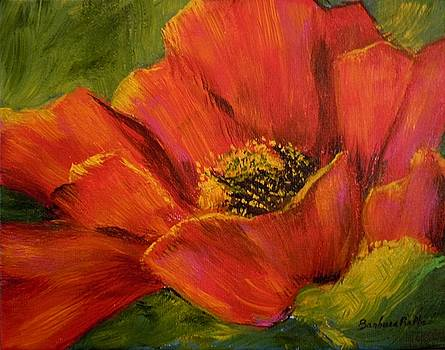 Sunlit Poppy by Barbara Pirkle