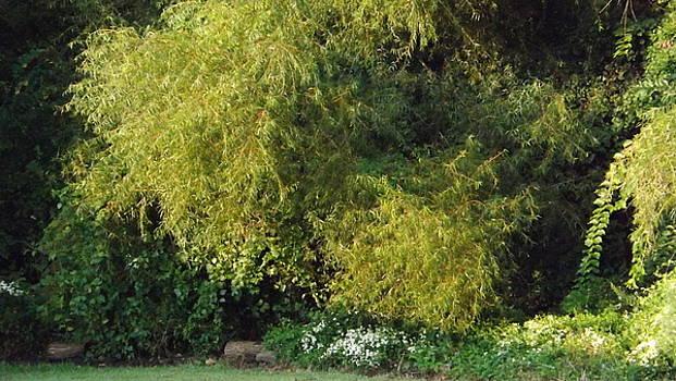 Colette Merrill - Sunlit Trees