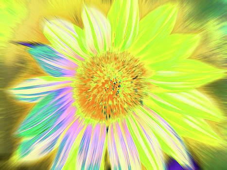 Sunluminary by Cris Fulton