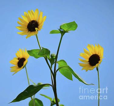Sunning Beauties  by Ray Shrewsberry