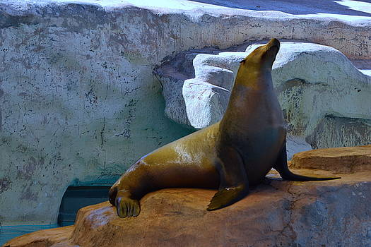 Sunning Sea Lion by Jasmin's Treasures