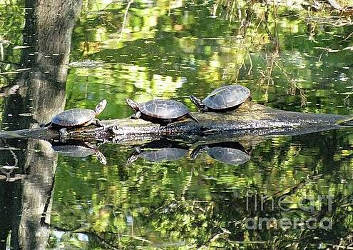 Cindy Treger - Sunning Turtles