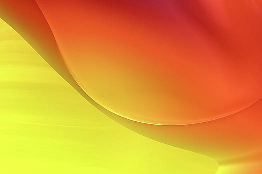 Sunny Abstract by Bonnie Bruno
