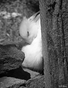 Alana  Schmitt - Sunny Bunny