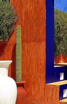 Sunny Cactus by Jack Thomas