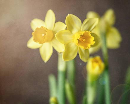 Lisa Russo - Sunny Daffodils