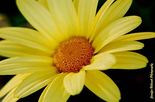 Sunny Daisy by Jennifer Urbanek