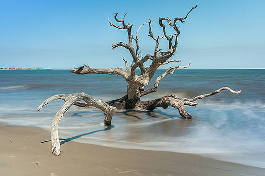 Andrew Wilson - Sunny Day at Driftwood Beach