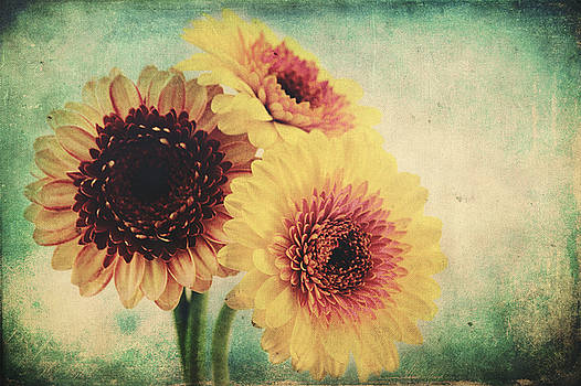 Angela Doelling AD DESIGN Photo and PhotoArt - Sunny Gerbera