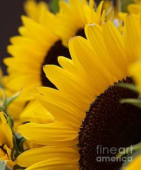 Sunny by Glennis Siverson