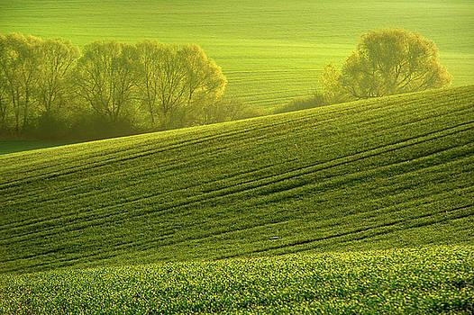Jenny Rainbow - Sunny Green