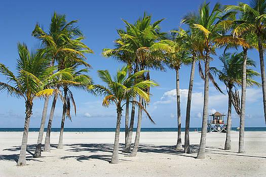 Sunny Miami Beach by Matt Tilghman