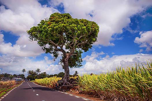 Jenny Rainbow - Sunny Road in Mauritius