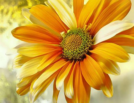 Sunny Side Up by Darlene Kwiatkowski