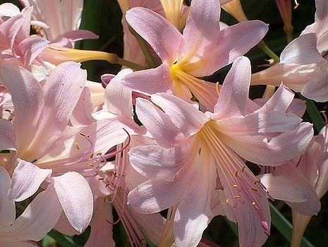 Sunny Surprise Lillies by Denise   Hoff