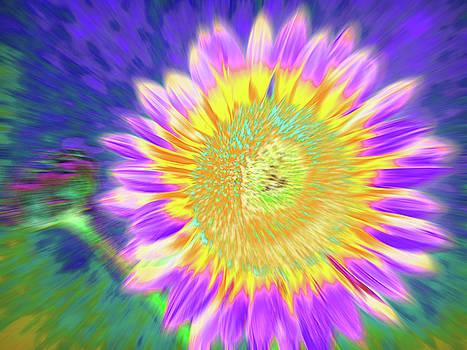 Sunpulse by Cris Fulton