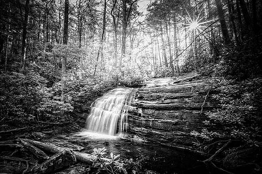 Debra and Dave Vanderlaan - Sunrays in the Forest Black and White