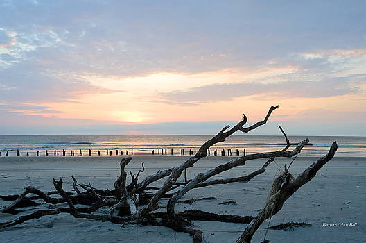 Sunrise @ Pea Island by Barbara Ann Bell