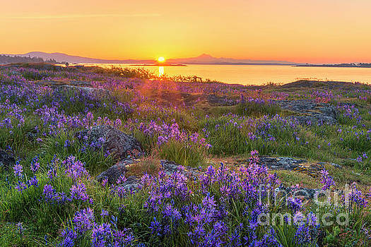 Sunrise and camas flowers by Michael Wheatley