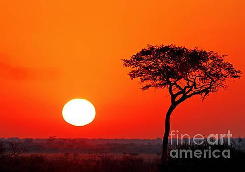 sunrise at central kalahari game reserve, Botsuana by Wibke Woyke
