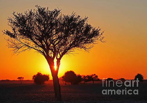 Sunrise at central kalahari game reserve, Botswana by Wibke W