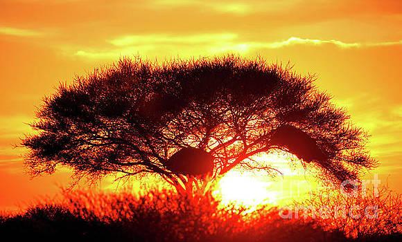 Sunrise at Etosha National park, Nami by Wibke W
