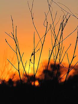Sunrise at the Circle B Bar by Chris Mercer