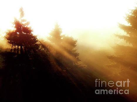 Sunrise Behind Pine Trees by Phil Perkins