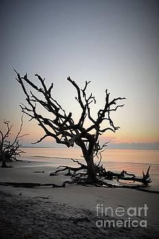 Sunrise Behind The Branches by Adelmo Leite de Sa