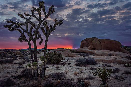 Rick Strobaugh - Sunrise behind the Joshua Tree