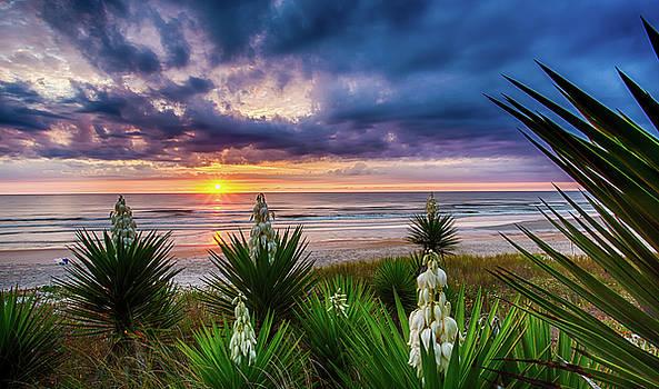 Sunrise Blooms by Dillon Kalkhurst