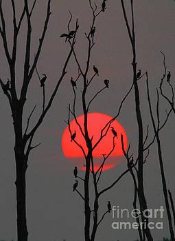 Sunrise Cormorants by Roger Becker