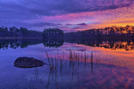 Sunrise Dream by Claudia Domenig