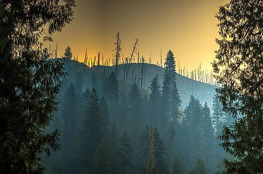 Forest Fire Sunrise by Brad Stinson