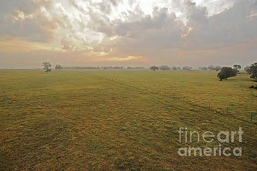 Billy Moore - Sunrise Field