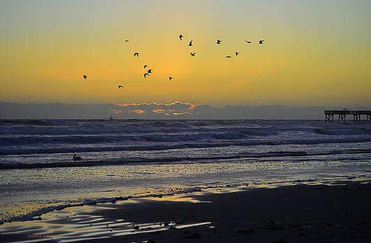 Sunrise flight of birds 11-28-15 by Julianne Felton