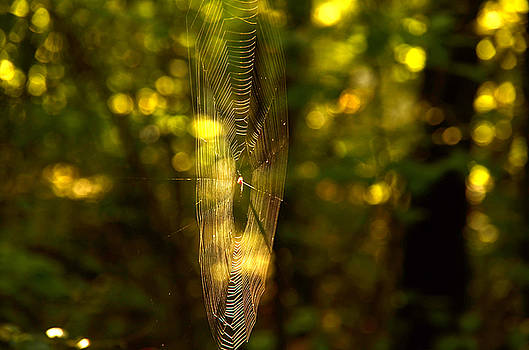 Sunrise for a spider by Charles Bacon Jr