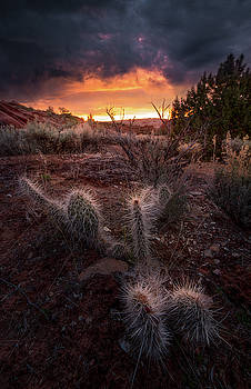 Sunrise Glow // Page, Arizona by Nicholas Parker
