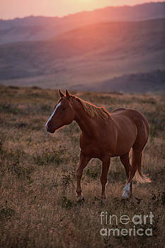 Sunrise Horse by Terri Cage