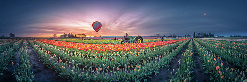 Sunrise, hot air balloon and moon over the tulip field by William Lee