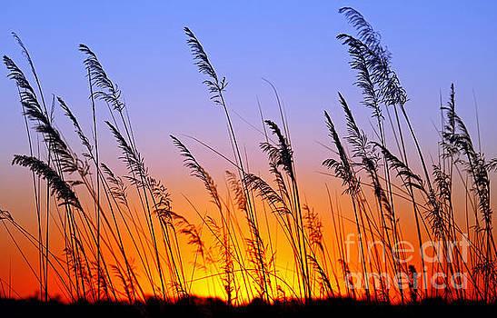 Sunrise in Africa by Wibke Woyke