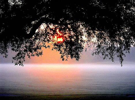 Sunrise in Fog by Ted Hebbler
